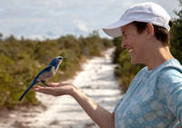 Blue Jay Scrubs with Becki at the Lyonia Preserve .